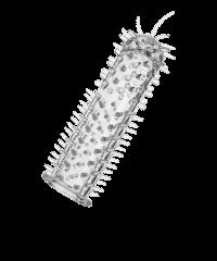 'Sensasoft', 16,5cm